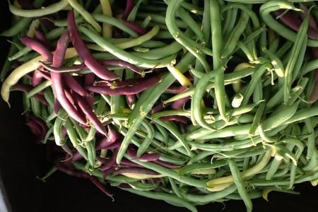 beans-450x300